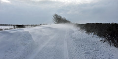 """Disappearing Act"" (AndyorDij) Tags: snow snowscape frozen snowdrift snowy ice frosty frost trees tree hedgerow england empingham rutland uk unitedkingdom 2018 andrewdejardin extonroad"
