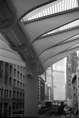 Train Leaving Trump.jpg (Milosh Kosanovich) Tags: chicagoarchitecture chicago bwfilm minoltax700 film vintagefilm epsonv750pro washingtonwabashstation architecture trumptower chicagophotographicart kodaktmax100 chicagophotoart mickchgo chicagophotographicartscom miloshkosanovich kodaktmaxrsdeveloper