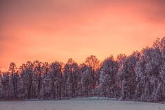 Chaleur hivernale - la lumière (BLEUnord) Tags: arbres trees fin journée end day hiver winter gel frost décembre december