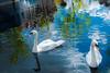 Los Cisnes de Delft (Stauromel) Tags: delft cisnes canal reflejos blanco azul holanda netherlands holland stauromel street alquimiadigital fuji fujixt2