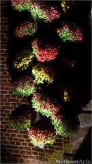 Enchanted Gardens 2017 - 001 (mchenryarts) Tags: arcen dunkelheit entertainment event events farbe fotojournalismus kasteeltuinen laternen licht lichtinszenierung lichtspektakel niederlande parkleuchten photojournalism schloessgaerten show garten laser lasershow