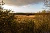 Les Hautes Fagnes (jipebiker) Tags: coucherdesoleil sunset hautesfagnes belgique belgium nuage cloud fagne fens ciel sky heurebleue bluehour tree paysage landscape