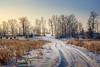 (Adam C Images) Tags: fuji xt2 mirrorless xtrans iii fujinon 1655 f28 r lm wr weather sealed 15x crop sensor winter landscape snow ice trees path verona ontario south frontenac township