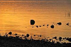 Jezioro Galilejskie (9)