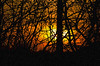 All Aglow..HSS DSN_1639 (iloleo) Tags: hss cs6 silhouette nikond7000 sun
