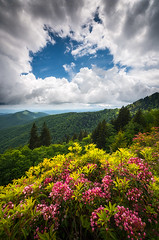 North Carolina Appalachian Mountains Spring Flowers Scenic Landscape (Dave Allen Photography) Tags: northcarolina mountains nc spring flowers appalachia scenic asheville outdoors blueridge parkway nature landscape springflowers nikon zeiss d810 milvus mountain wnc