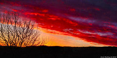 Scotland Greenock a crimson dawn 7 February 2018 by Anne MacKay (Anne MacKay images of interest & wonder) Tags: scotland greenock crimson red dawn sky clouds tree landscape xs1 7 february 2018 picture by anne mackay
