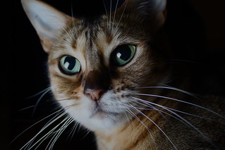 Tootsie Portrait