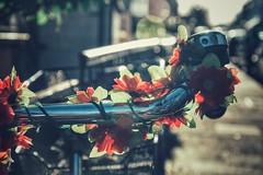 ☀️kleine Freuden☀️ (***étoile filante***) Tags: bike bicycle fahrrad flowers blumen sun sonne sunlight sonnenlicht street strase nikon bokeh bokehlicious dof
