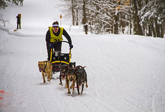 Tug Hill Challenge (Matt Champlin) Tags: dogs doggies sled sledding dogsled dogsleds animals cute woof bark fun race racing tug tughillchallenge 2018 canon