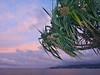 Fala Sunset. Screwpine, Pandanus tectorius, Mulinu'u Point, Apia, 'Upolu, Samoa (Rana Pipiens) Tags: germansamoa apiaupolusamoa oka poke pandanchicken pandanustectorius screwpine fala mulinuupointapiaupolusamoa plant harbor sunset scenics landscape sony pandanfruit pandankernel