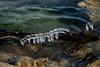 Eiszapfen am Fluss (J.Weyerhäuser) Tags: rhein stadtpark eis rheinufer river ice water