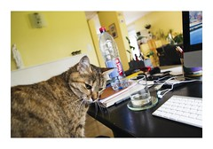 _JPR2429 (Jordane Prestrot) Tags: jordaneprestrot tempsquotidien cat chat gato imac ♉