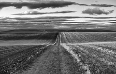Rumbo al horizonte (una cierta mirada) Tags: horizon landscape nature clouds cloudscape outdoors paths agriculture bnw blackandwhite