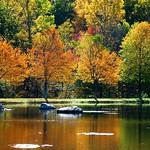 Golden Reflection thumbnail