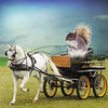 Living the good life (jaci XIII) Tags: charrete cavalo esquilo animal carro campo horse squirrel car field