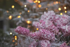 Golden spots (sonia.sanre) Tags: beautiful lights bokeh rosa nieve flores snow pink flowers