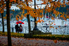 Walking in the Rain (YL168) Tags: walking rain sony a6000 vancouver autumn leave coalharbor waterfront canada walk red umbrella water sky nature white orange 18105mm glens sonyflickraward maple color romanic flickrunitedaward