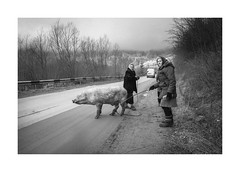 Walk to the sow (Jan Dobrovsky) Tags: carpathians leicaq winter street people outdoor kryvorivnja countryside monochrome boar pig blackandwhite sow walk ukraine countrylife document