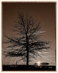 Bwphotocontest 3 or maybe monomad trees (Singing With Light) Tags: 2016 2017 20th alpha6500 ct charlesisland duckpond february milford mirrorless singingwithlight a6500 beach photography singingwithlightphotography sony sunrise walnutbeach winter