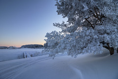 curly (Sergey S Ponomarev - very busy) Tags: sergeysponomarev canon eos 70d efs1018f4556isstm nature natura paysage paesaggio landschaft winter inverno frost cold river bridge forest morning dawn sunrise kirov viatka vyatka russia north nord january 2018 europe pine highdynamicrange hdr hoyafilters minimalism texture сергейпономарев природа пейзаж утро рассвет дерево зима река мост киров вятка россия снег мороз холод никульчинка волково