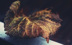 Leaf caught in a web outside my window (suzyhazelwood) Tags: leaves leaf autumn winter nature sony a6000 creativecommons