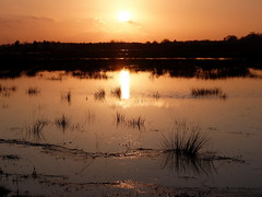 Sunset in Moor (Maritime Fotografie) Tags: tolle martin weser river sun sonne leuchtfeuer germany maritim norddeutschland berne strand bremen farge gras baum himmel landschaft dämmerung sonnenuntergang sunset