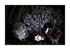All Feathers And Flowers (paulinecurrey) Tags: macro design creative artistic theatrical flowers rose photoshop indoors camera shoes fan hairpiece feathers smileonsaturday madebyme
