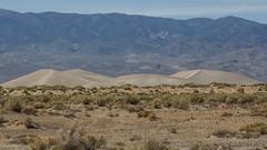 Moderately Large Dunes in Nevada (Jeffrey Sullivan) Tags: central nevada united states usa landscape nature photography canon 5d mark ii photo copyright april 30 2014 jeff sullivan sand dunes travel bureauoflandmanagement blm