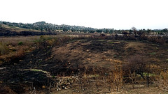 Peters Canyon: Desolation (EmperorNorton47) Tags: peterscanyonregionalpark orange california photo digital winter fire firedamage deadtrees burnt hill chapparal