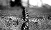 DSC_0054 (Antonio Aliperti) Tags: catene biancoenero bnw bn ph foto fotografia fotografare dettagli detalis photo photos reflex nikon 50mm focus shot shots digital monocrome
