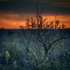 Burning Bush (copazetic) Tags: 2016 coahuila events mexico olympusmzuiko40150mmf4056r winter zaragoza
