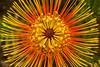 Color Explosion (smiley006) Tags: hawaii maui orange flower color