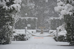 Nevica (freedoog) Tags: neve roma vaticano tiber tevere fiume pupazzo biciclette santa maria closcard punk bestia cani palle di bianco trilussa ponte sisto porta settimiana usa america