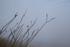 Tum05_small (patcaribou) Tags: tucson tumamochill sonorandesert fog cactii saguarocactus