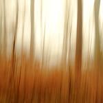Winter Wood thumbnail