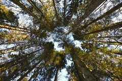 Tree Symmetry (CoolMcFlash) Tags: tree nature symmetry lowangleview perspective pov forest baum bäume natur symmetrie symmetrisch perspektive blickwinkel wald fotografie photography fujifilm xt2 xf1024mmf4 r ois