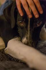 Quality time (mripp) Tags: art vintage retro old dog hund streicheln cozy kuscheln hegge leica cl summilux tl 35mm