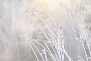 Frosty Innocence..