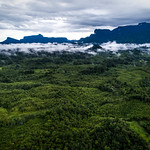Aerial view of West Kalimantan thumbnail