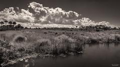 Merritt Island Mornings (59roadking - Jim Johnston) Tags: ifttt 500px placid reed dramatic sky sun river florida vista swamp