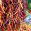 Hot stuff (halifaxlight) Tags: italy campania positano amalficoast chillipeppers food display red bokeh square
