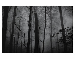 U N T I T L E D  [ F O G  # 2 ] (bruXella & bruXellus) Tags: parcduden brüssel bruxelles brussels brussel belgien belgique belgium belgië leicax1 blackwhite bnw monochrome brume brouillard nebel fog
