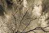 Reaching to the Sky (panos_adgr) Tags: nikon d7200 bw parnitha attica greece abandonment abandoned tree sky cloud