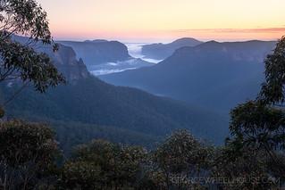 View Through the Eucalyptus