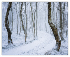 BoleHill Snow Storm (shaunyoung365) Tags: winter peakdistrict uk landscape snow sonya7riii trees