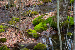 Nature Walk (Stroebel Studios) Tags: nature woods walk hike connecticut colchester salem ct trees water mushrooms snow