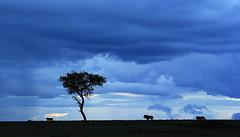 Moody sky at end of afternoon - Masaï Mara - Kenya (lotusblancphotography) Tags: africa afrique kenya nature landscape sky clouds crépuscule nuages ciel animal wildlife moodysky