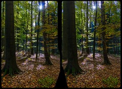 Höllengrund in fall 3-D / CrossView / Stereoscopy / HDR / Raw (Stereotron) Tags: saxony sachsen saxonswitzerland sandstone mountains nationalpark sächsischeschweiz höllengrund indiansummer autumn fall forest woods outback backcountry wilderness wald crosseye crosseyed crossview xview cross eye pair freeview sidebyside sbs kreuzblick 3d 3dphoto 3dstereo 3rddimension spatial stereo stereo3d stereophoto stereophotography stereoscopic stereoscopy stereotron threedimensional stereoview stereophotomaker stereophotograph 3dpicture 3dglasses 3dimage canon eos 550d chacha singlelens kitlens 1855mm tonemapping hdr hdri raw
