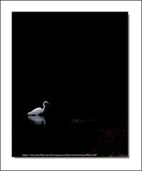 """ L'Oiseau blanc "" (Jérôme Delahaye) Tags: olympus em1 zuiko 50200swd loiseaublanc picardie"
